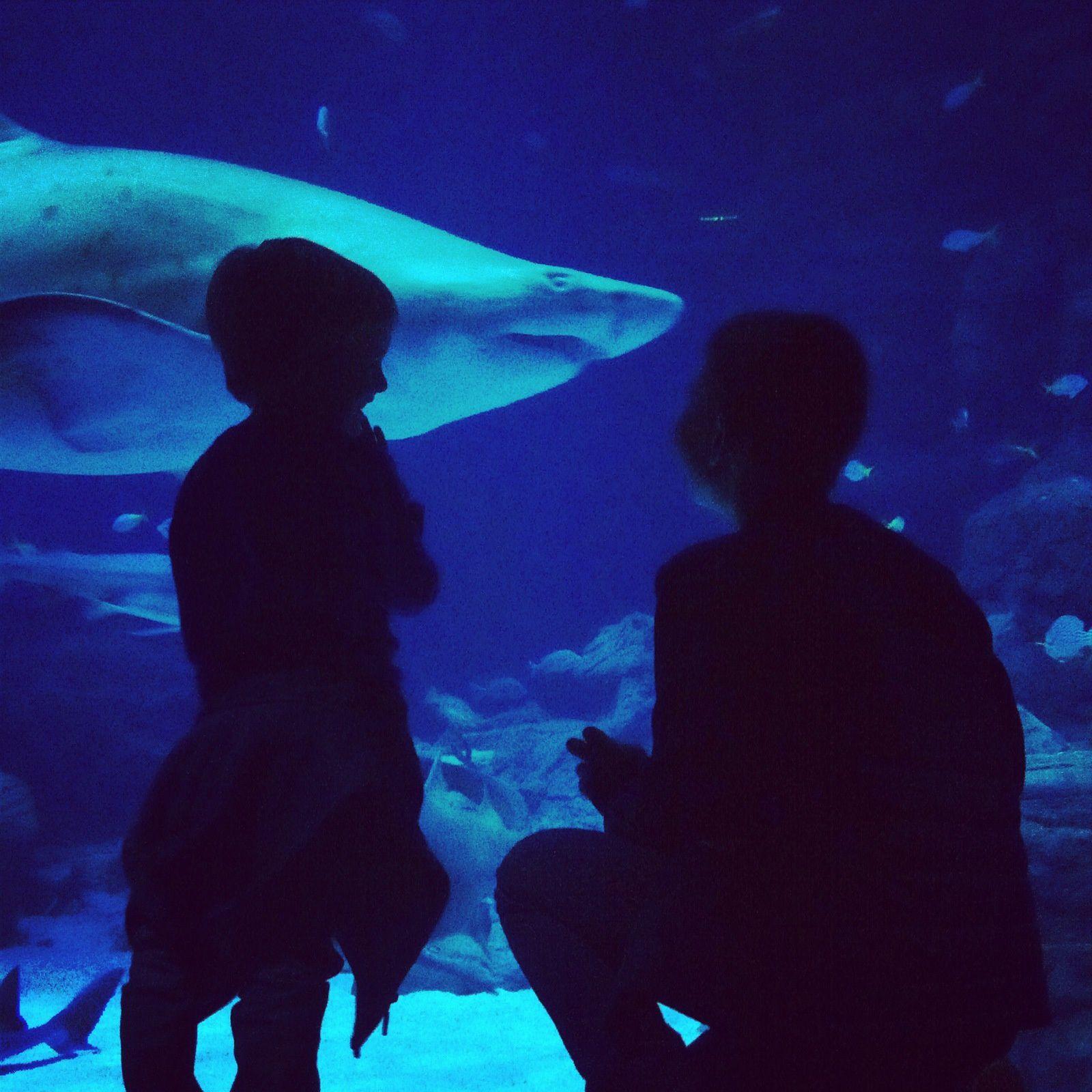 Aquarium Mare Nostrum, lecture, gratin de boutternut, Pierres Vives Montpellier, Stikeez, peinture, loisirs créatifs.