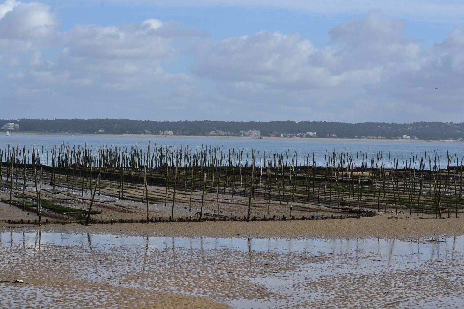 Le Bassin d'Arcachon fin février .