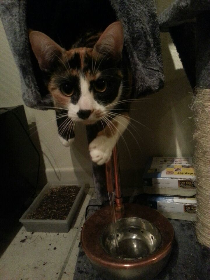 The cat discovers the cat fountain