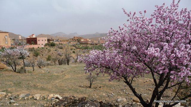 Tafraout - Tiznit en photos