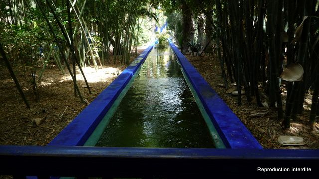 Photos du jardin de Majorelle (Yves St Laurent)