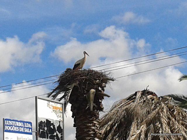 Photos de la côte du côte de Portimao