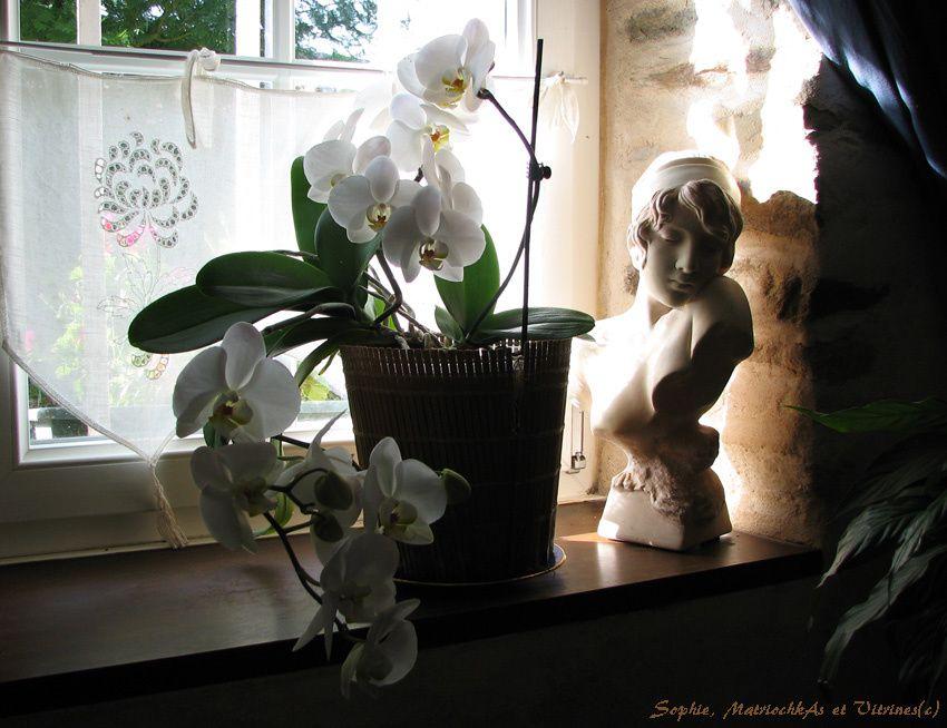 Orchidée 2017