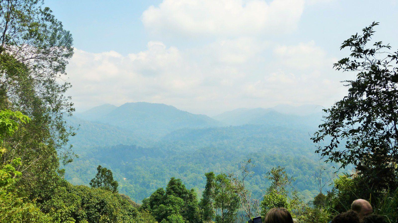 Parc Taman Negara - Malaisie