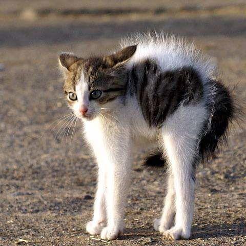 Le chat du 28/09/2016
