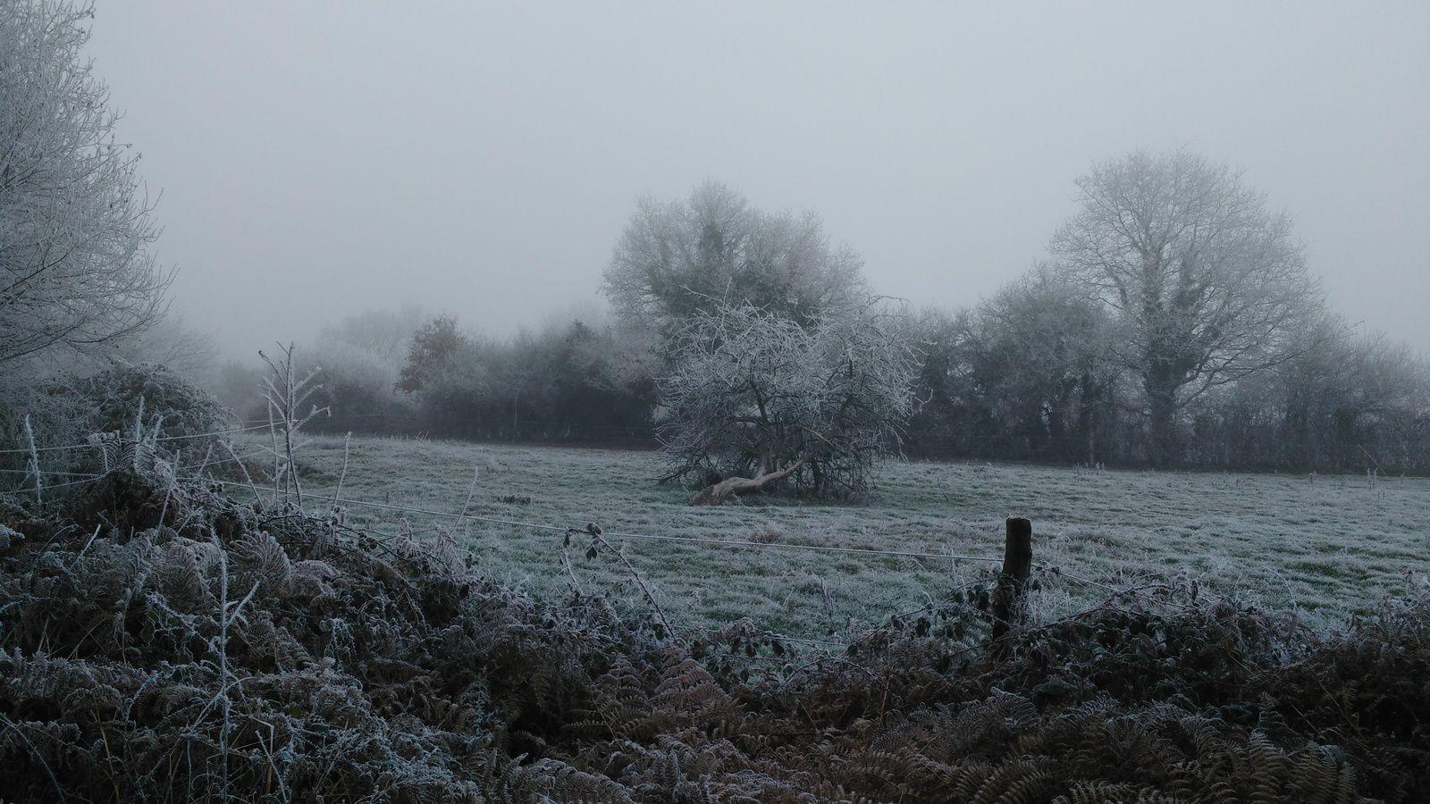 La photo du 30/01/17 : paysage gelé