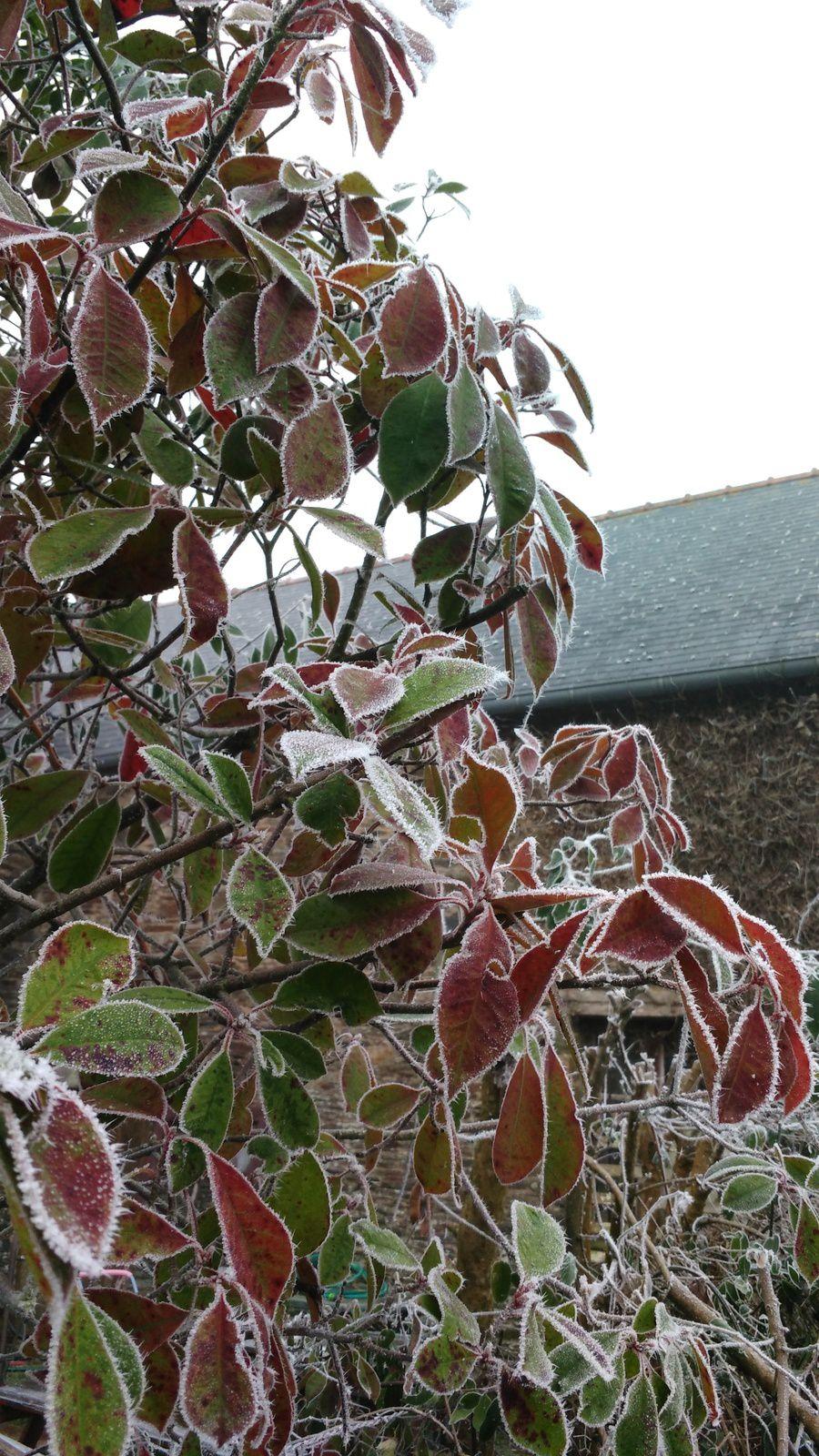 La photo du 25/01/17 : paysage gelé