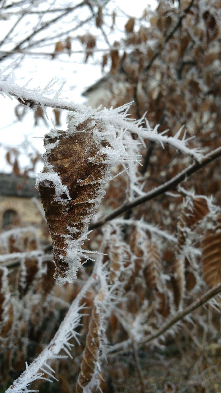 La photo du 07/03/17 : feuille gelée