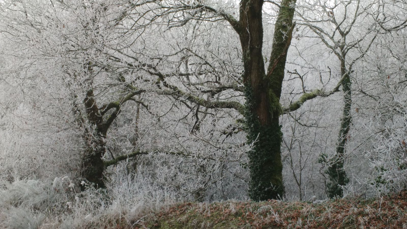 La photo du 26/02/17 paysage gelé