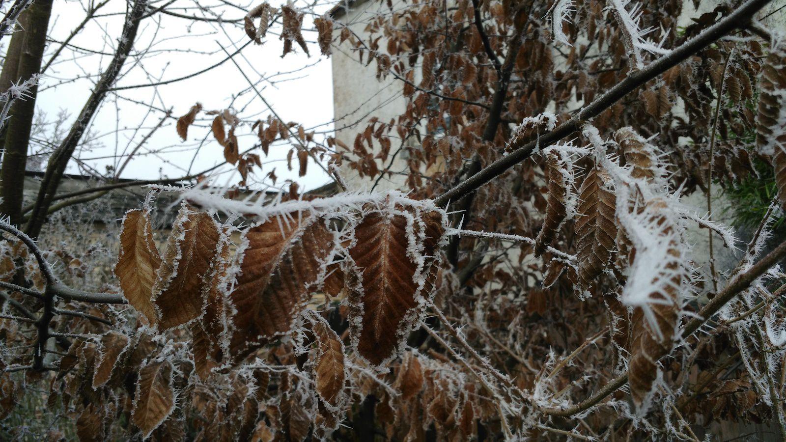 La photo du 05/03/17 : feuilles gelées