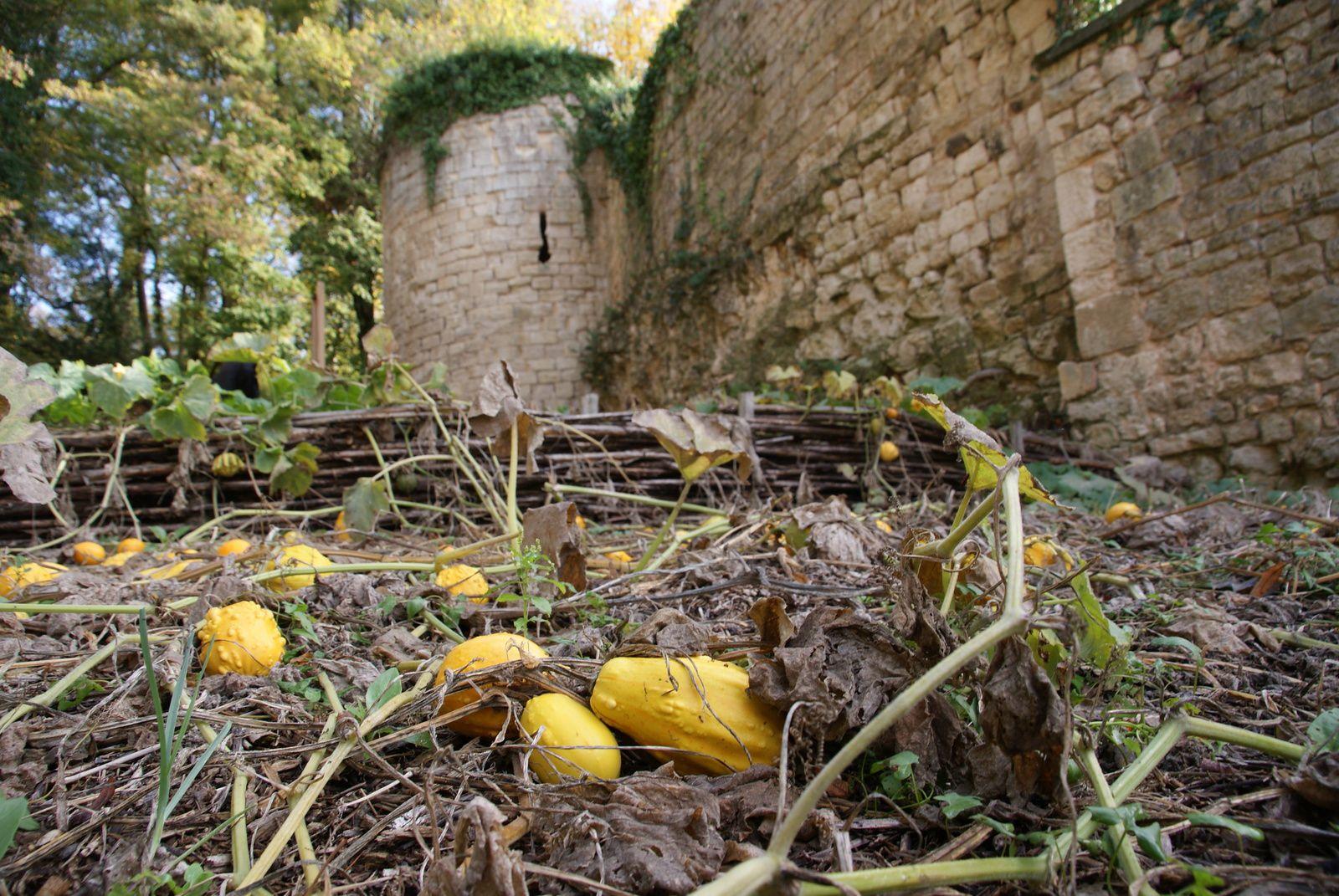Un automne à Fontenay le Comte : à vos appareils photos !