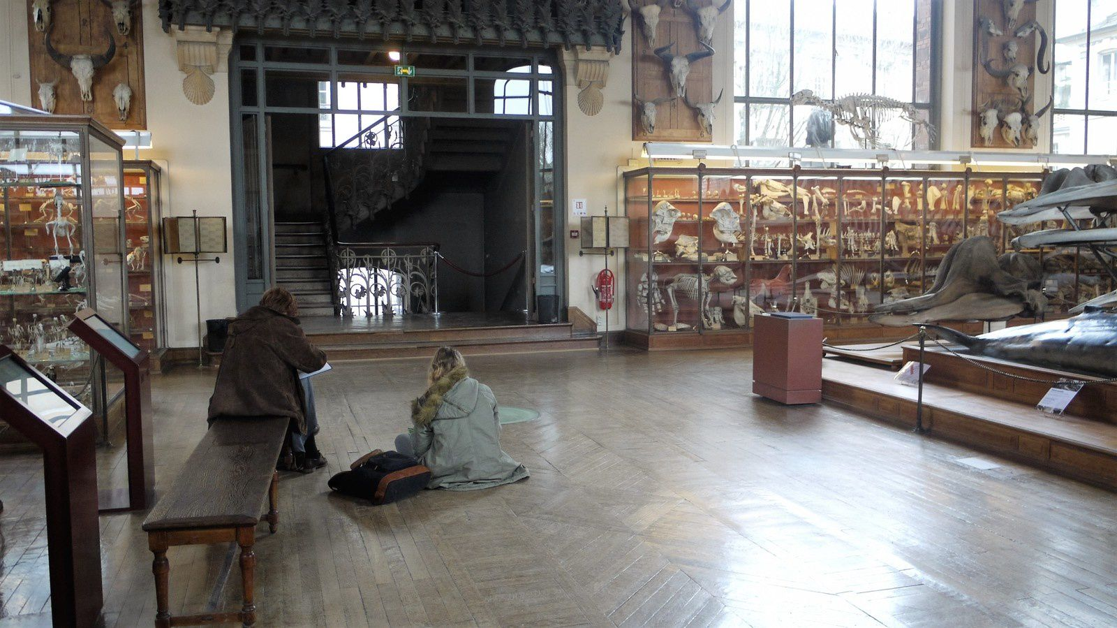 -Paris- Dans les galeries d'anatomie comparée et de paléontologie