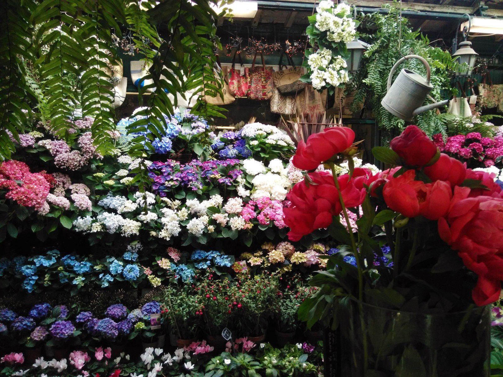 -Paris- Le marché aux fleurs et aux oiseaux de Cité