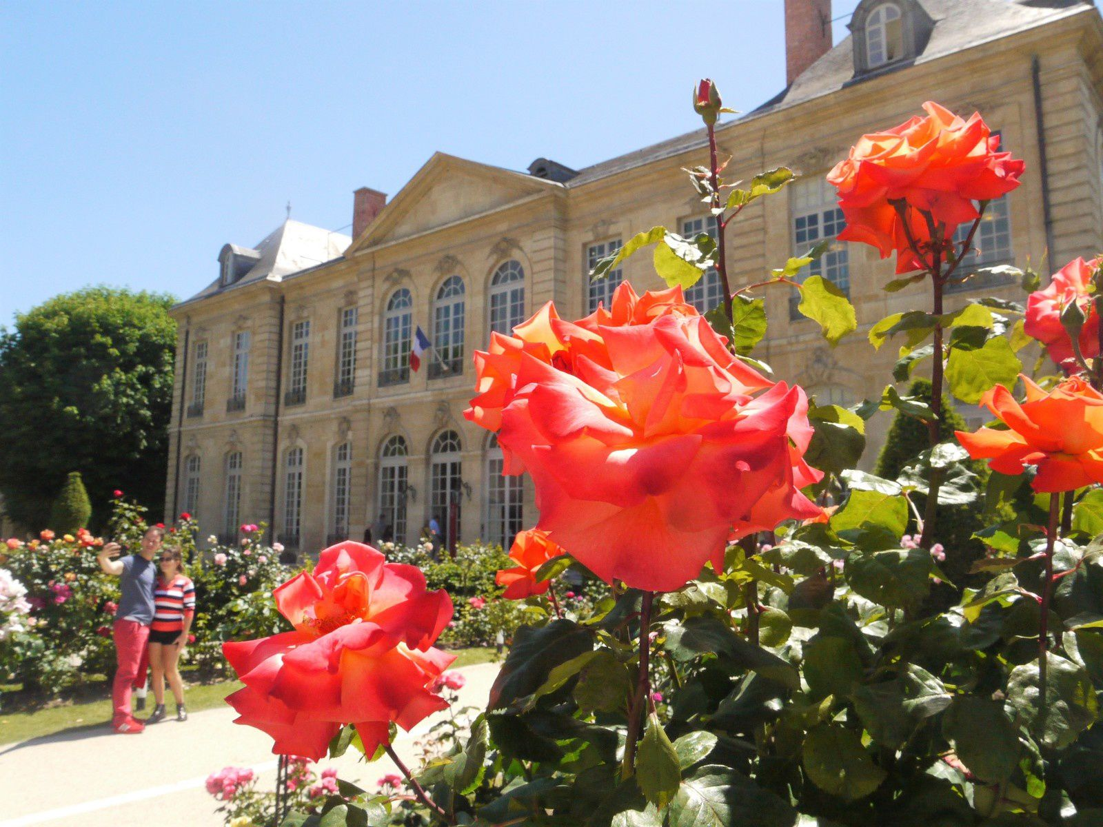 Balade parfumée dans les jardins du musée Rodin