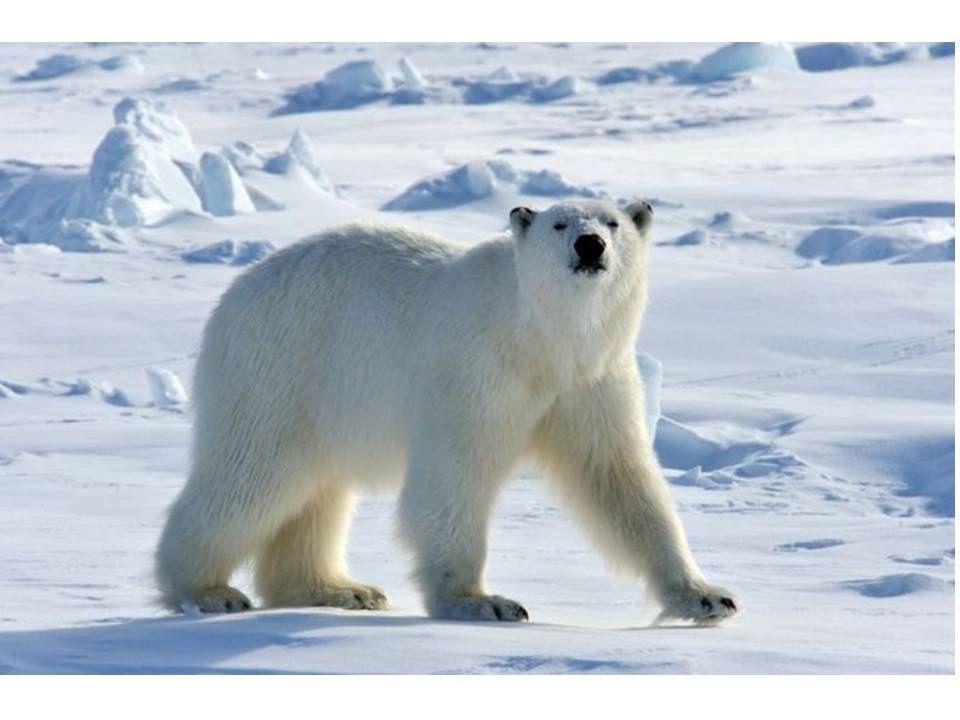 L'Arctique pourrait disparaître : Les Industriels eux continuent d'augmenter leurs profits !