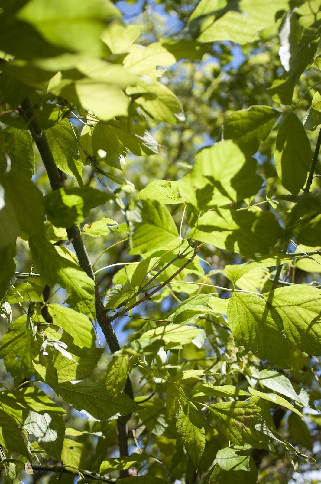 L'été en couleur #Vert