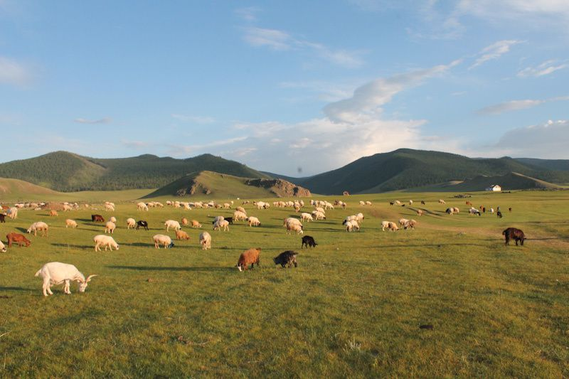 Roadtrip en Mongolie: Orkhon valley