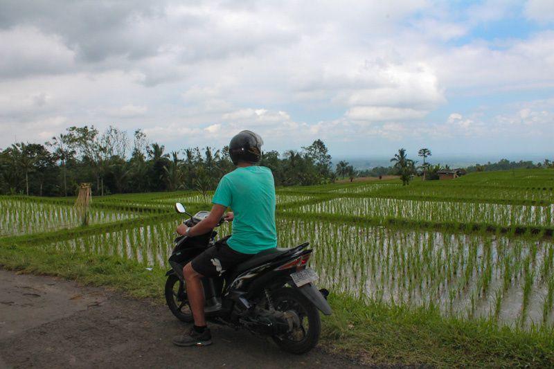 Bali: Les rizières de Jatiluwih & le temple de Tenah Lot