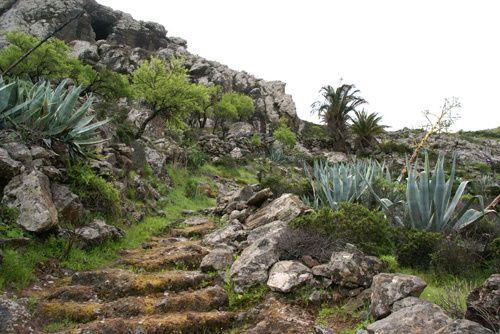 Randonnées à La Gomera