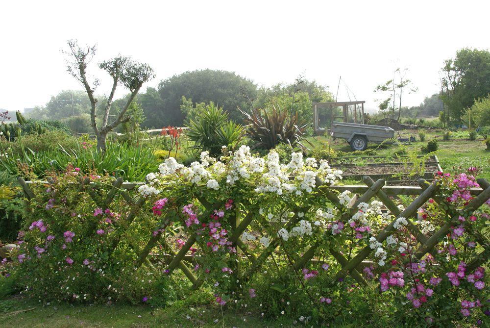 haie de rosiers le blog des 7 jardins. Black Bedroom Furniture Sets. Home Design Ideas