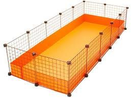 guinea pigs cavy cage