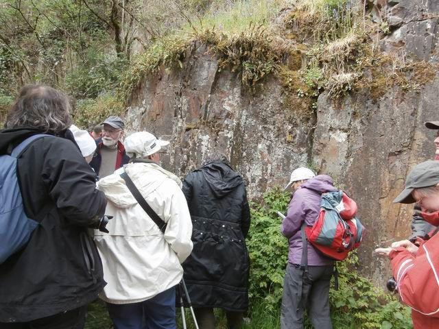 … d'une véritable falaise rocheuse formée par des cornéennes c'est à dire des schistes briovériens transformés au contact du granite d'Athis (déjà évoqué).