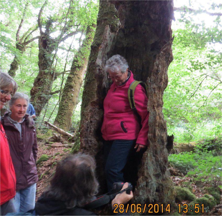 Annie quant à elle s'est trouvé une niche à son goût dans cet arbre creux… qui abrite et nourrit aussi quantité d'animaux (xylophages) divers !