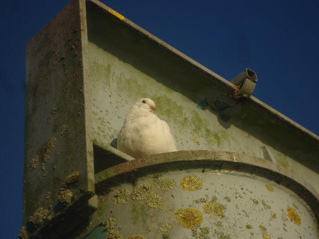 Des oiseaux n'hésitent pas à venir s'abriter dans les endroits les mieux abrités et ensoleillés !