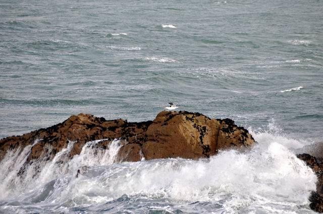 ... car la vue vers le large permettait de voir les oiseaux marins (Fous de Bassan notamment) qui fréquentent le secteur.
