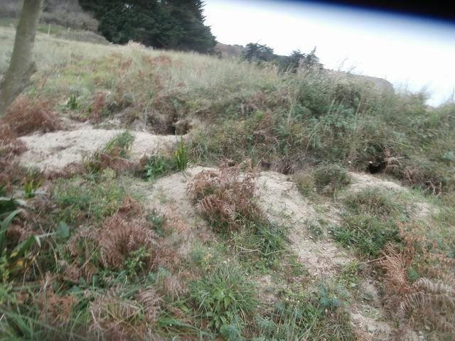Voyez que les terriers de Blaireaux sont visibles en plusieurs endroits.