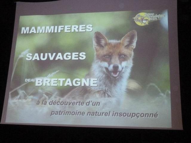 C'est le G.M.B. (Groupe Mammalogique Breton) qui proposait ce sujet.