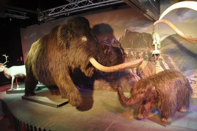 Voici la salle des mammouths...