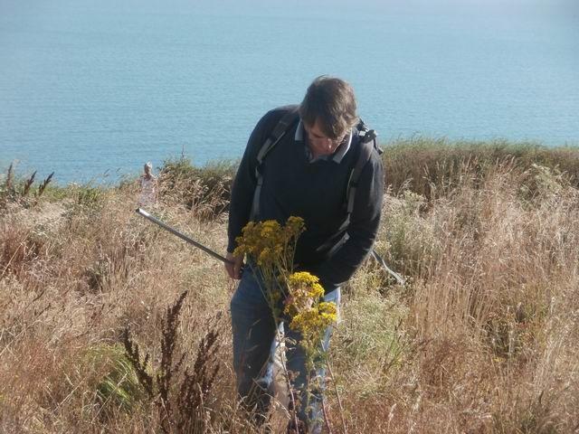 Comme l'an dernier aussi Jérémy recherche sur certaines plantes les insectes qui les fréquentent.