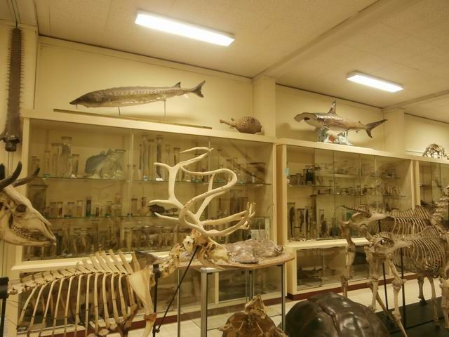 Ici, au premier plan, un squelette de renne… dont les bois sont curieusement dissymétriques… et nous savons maintenant pourquoi...