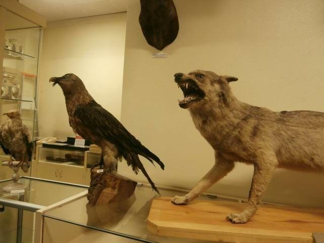 … et ces prédateurs (avec le loup au premier plan dont je vous ai déjà montré la tête).