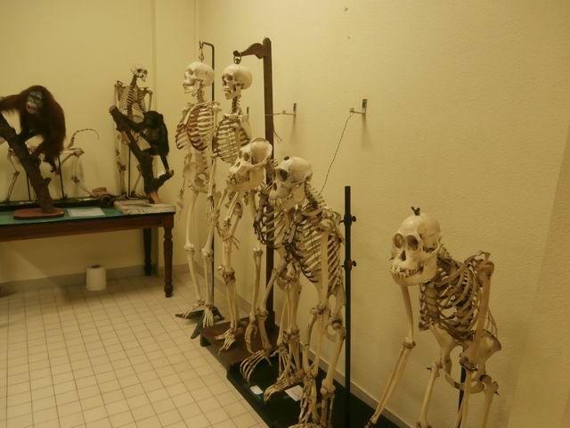 … parfois avec le squelette complet.