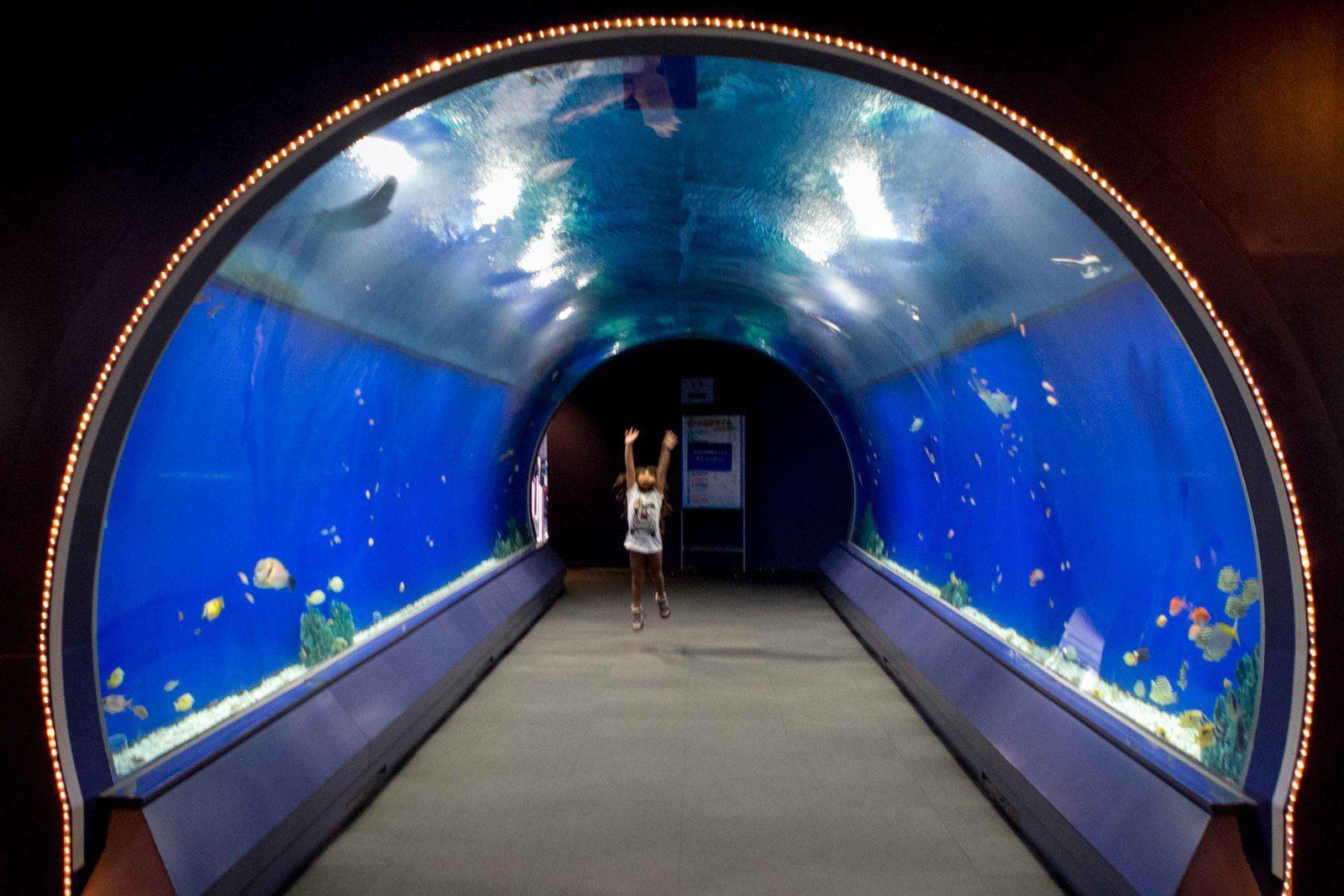 Aquarium...
