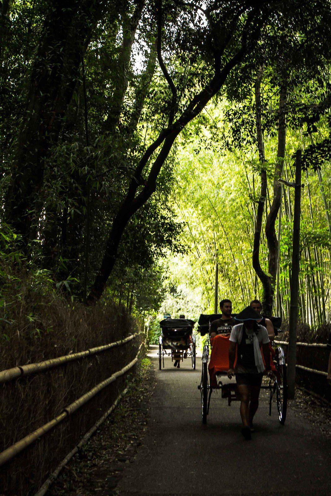 Déclinaison sur la bambouseraie d'Arayashiyama