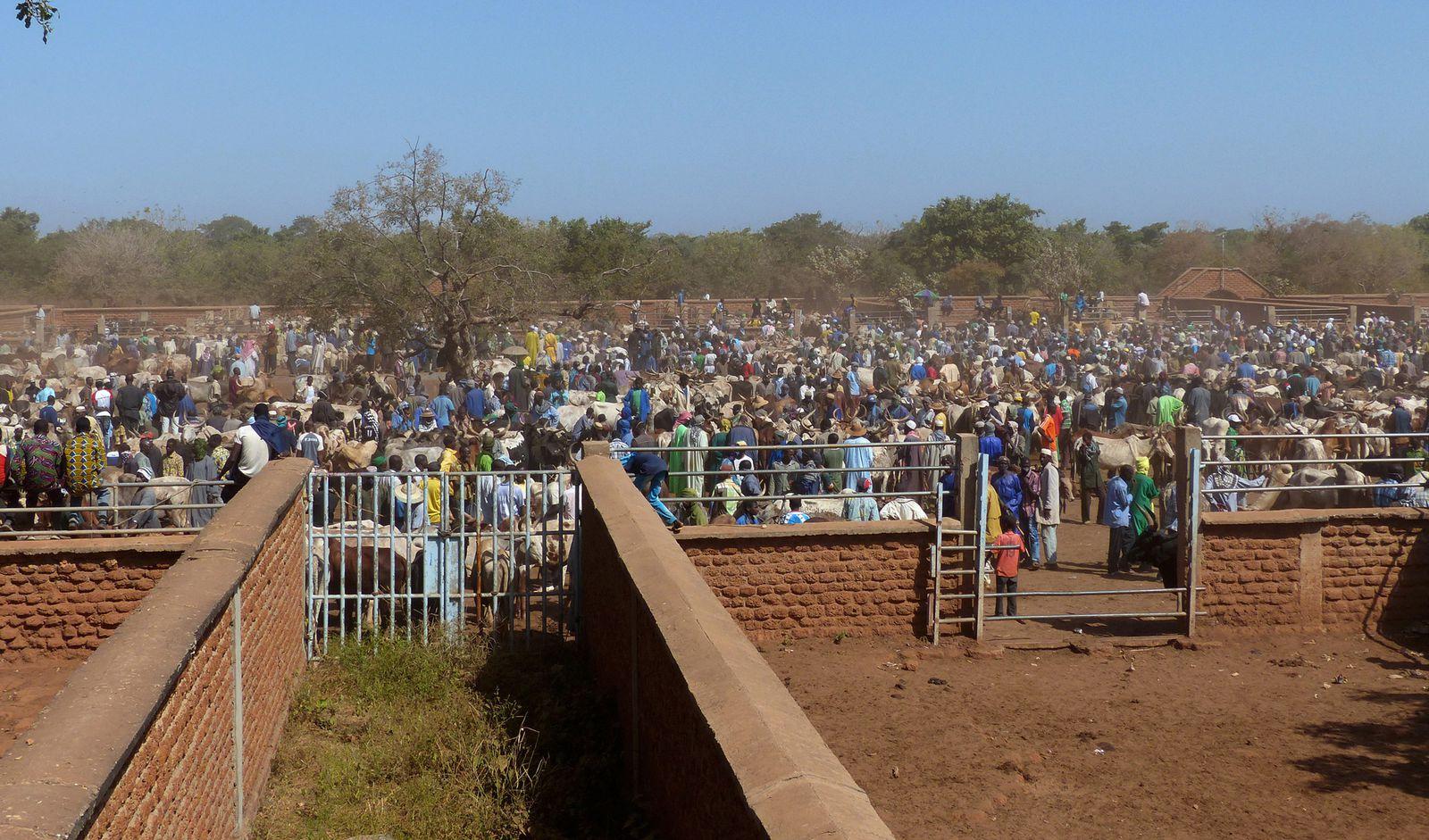 Le marché au bétail de Fada