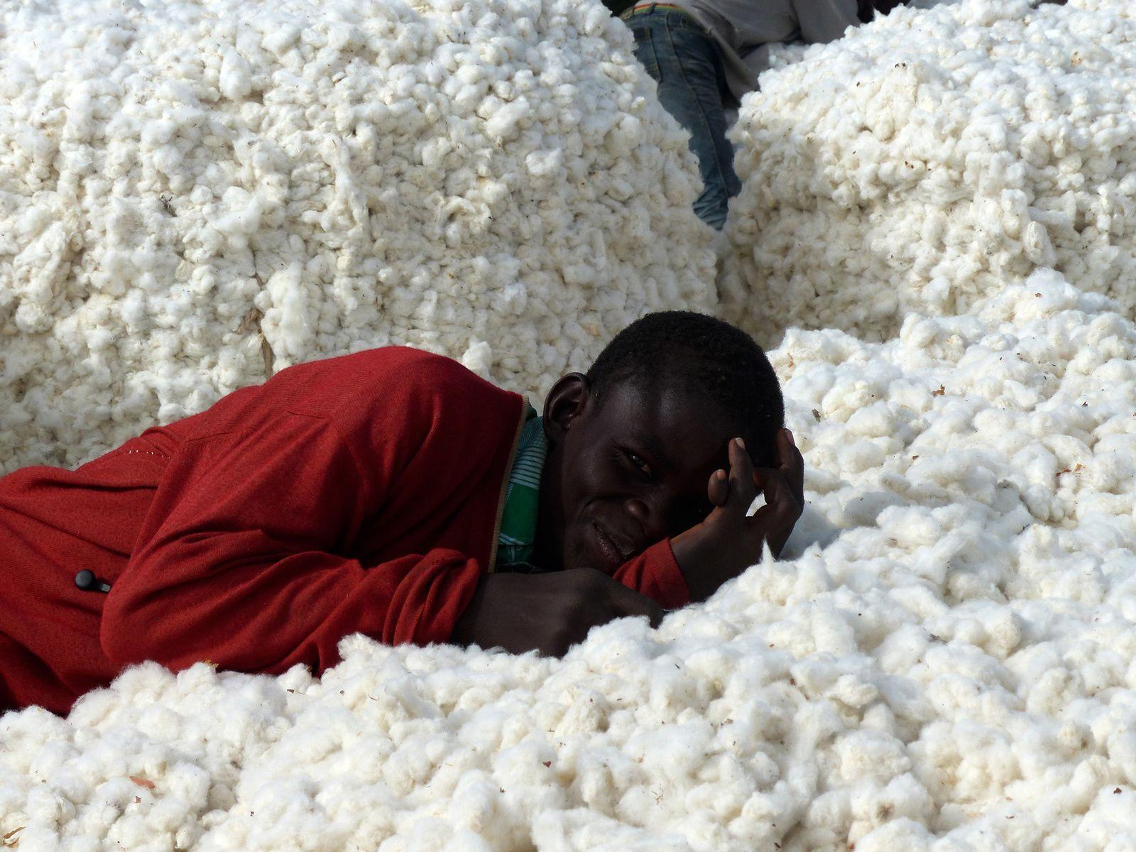 La campagne d'achat du coton