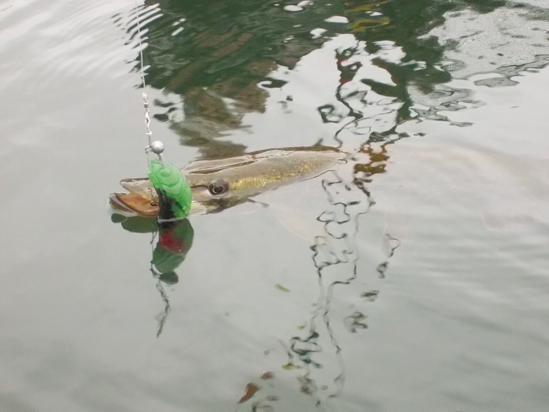 Sortie Float tube ce matin.
