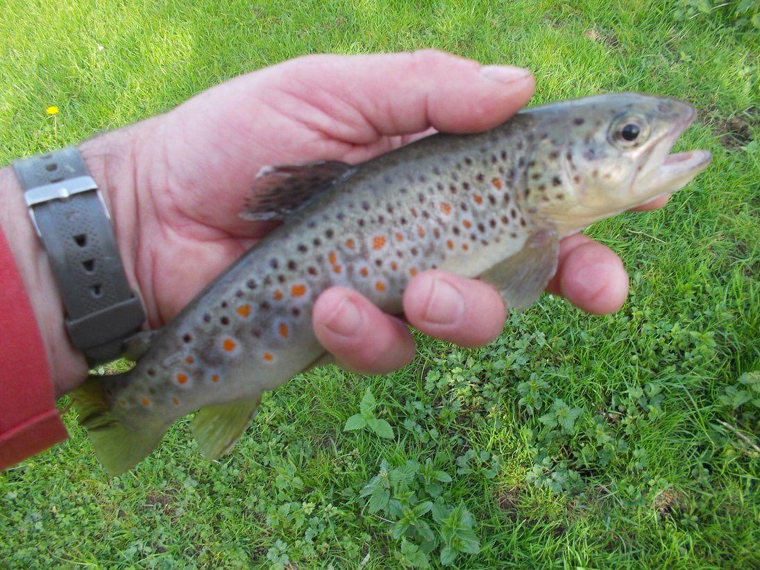 Une bien belle journée de pêche !
