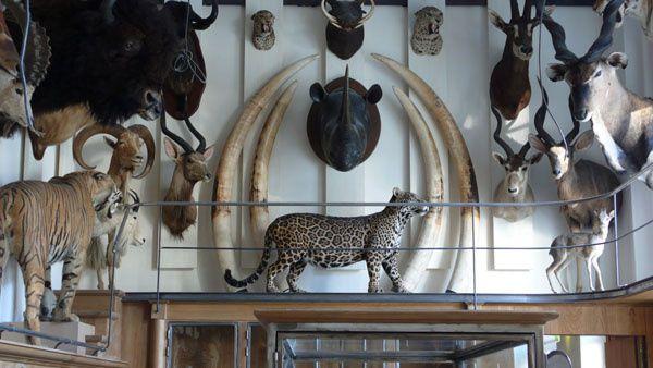 Le musée de la chasse c'est sexy