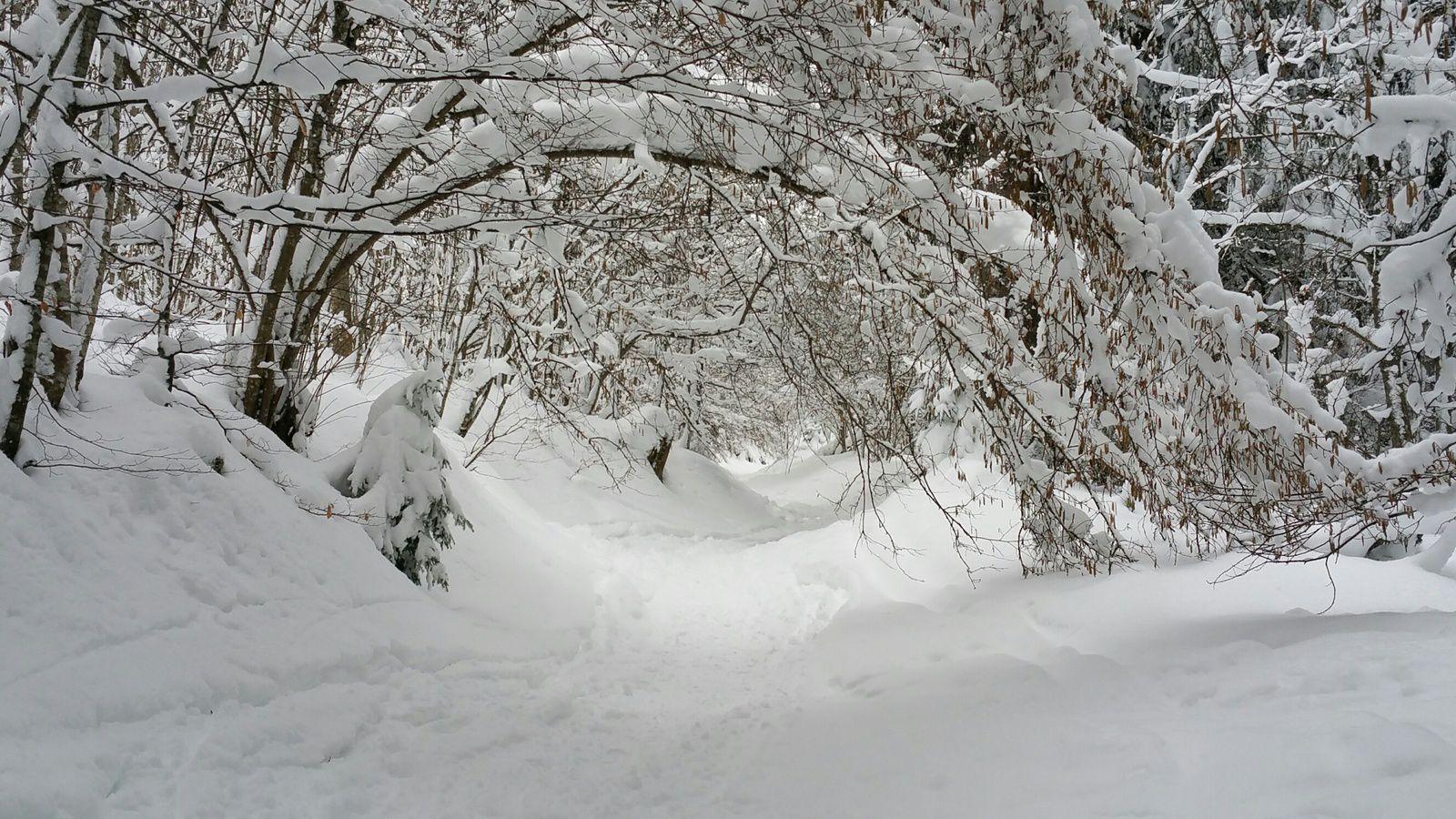 grosses chutes de neige aux Carroz