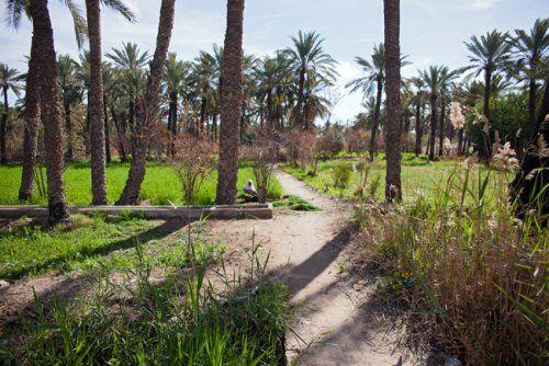 Comment sauver une oasis menacée par la pollution...