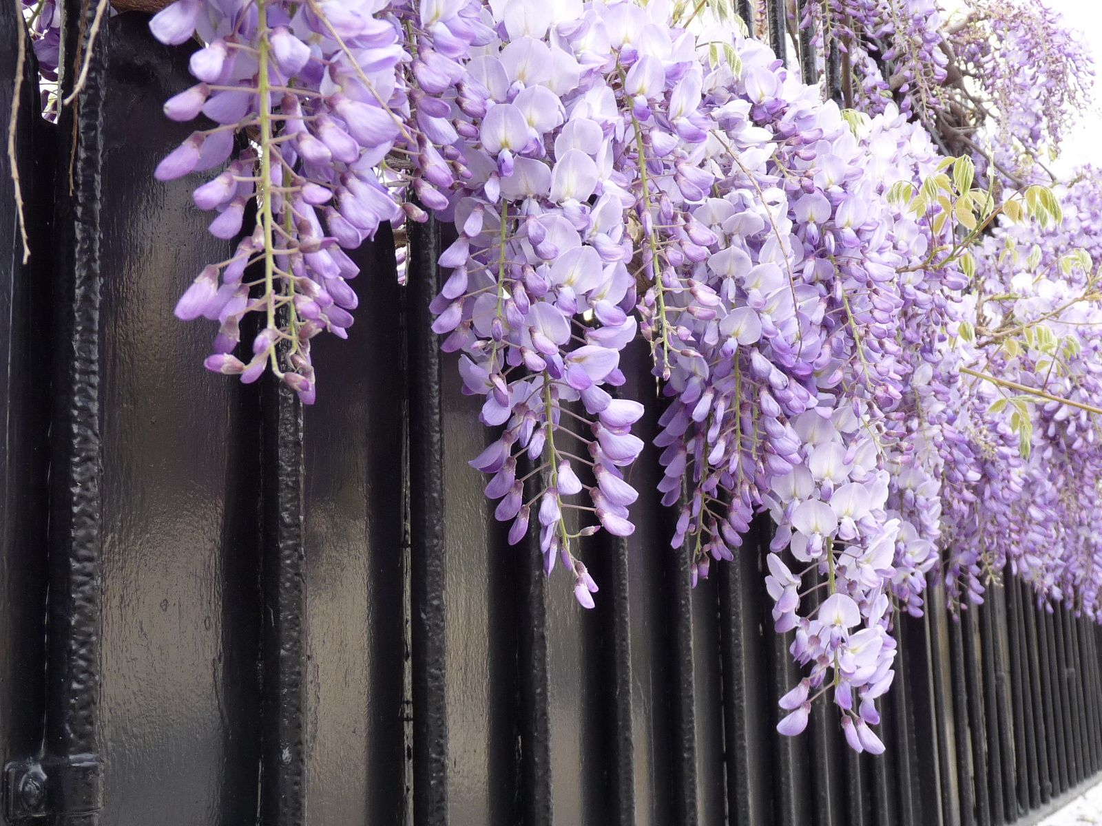 ...variation en rose et violet...