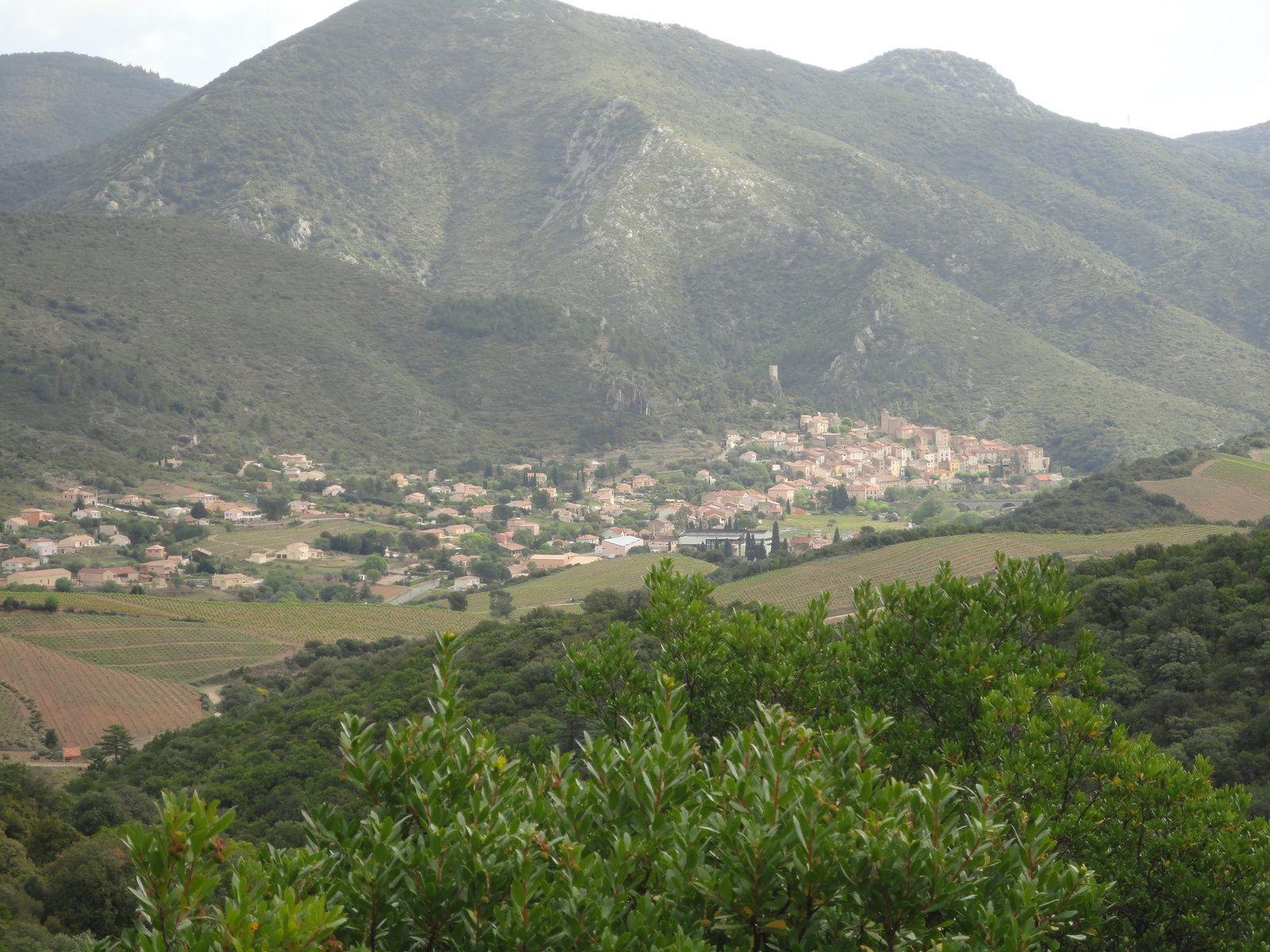 L'arbousier Roquebrun le 27 avril