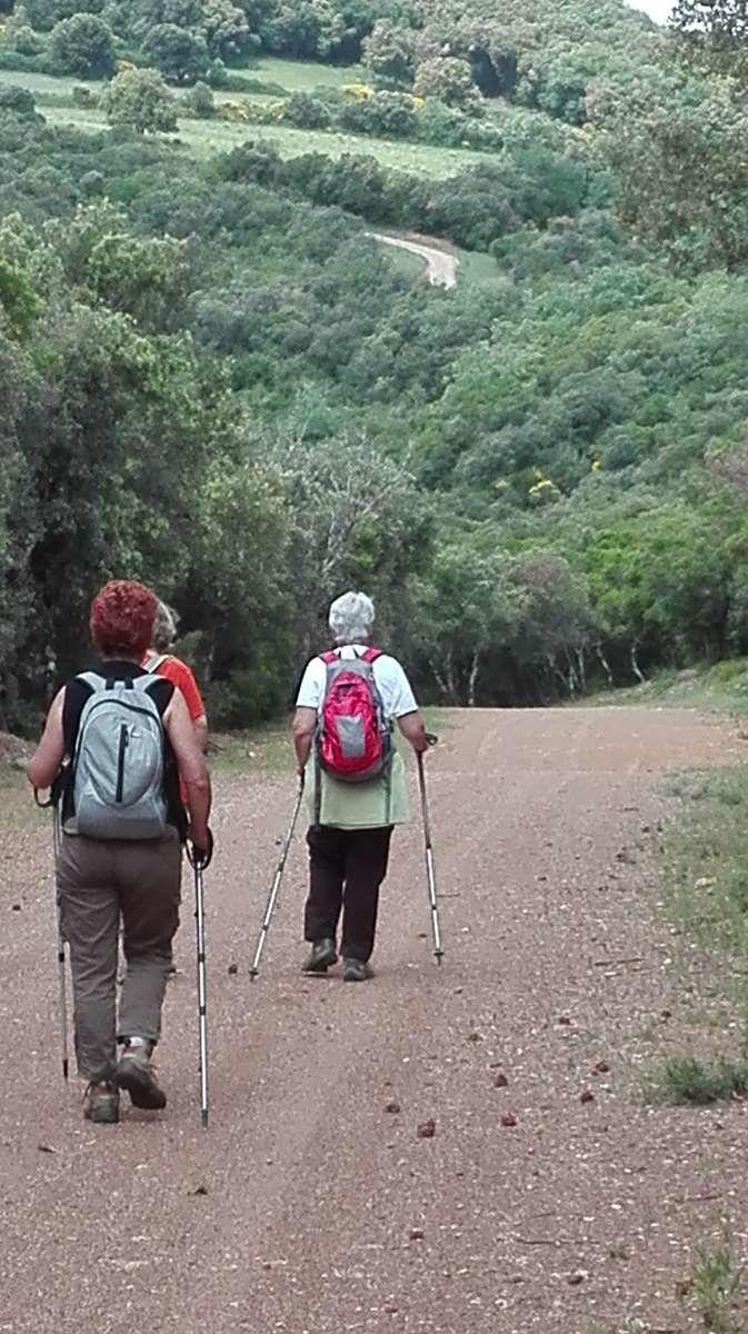 ROQUE TRAUCADE FORET DE CARLENCAS