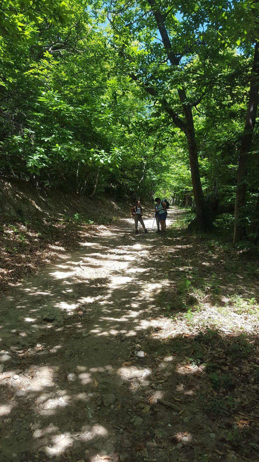la forêt des écrivains combattants