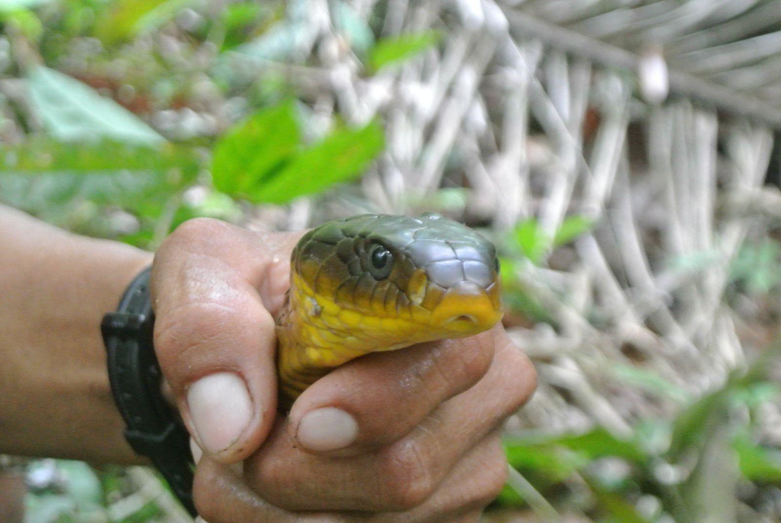 Amazonie - Perou